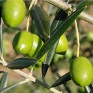 huile olive2.png